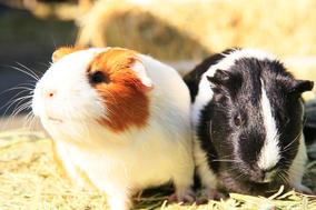 かわいい動物が大集合!秋のわくわくふれあい動物園