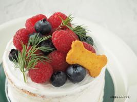 ワンちゃんのケーキ作り